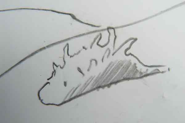nudibranch-sketch