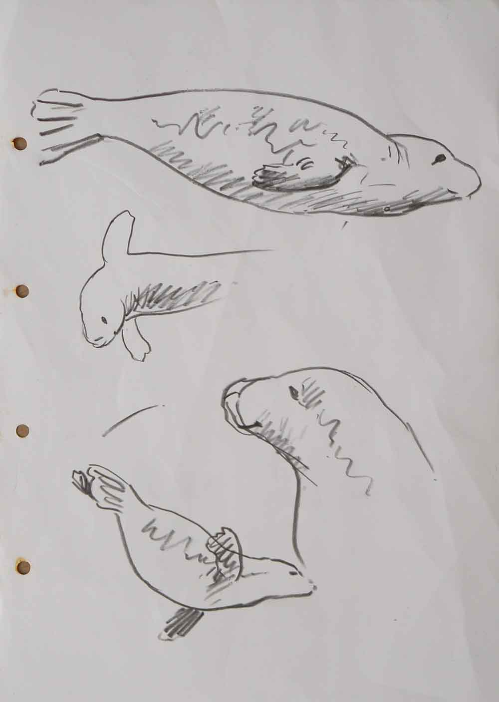Seal-sketches