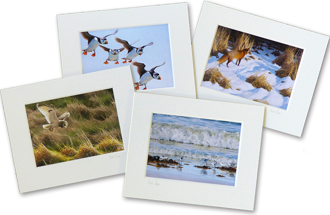 Small, 8 x 10 inch mounted prints
