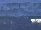 Humpbacks in the Gerlache Strait