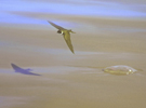 The sand martin and the jellyfish