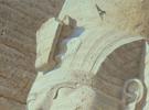 Smiling at the sun (rock martins at Abu Simbel)