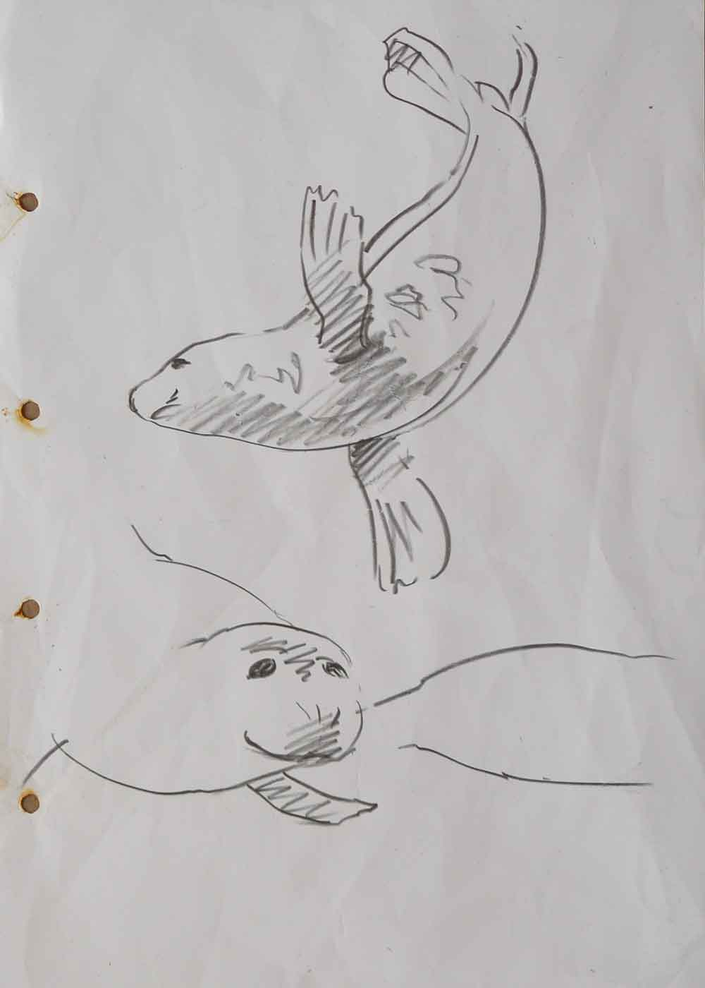 Seal-sketches-2