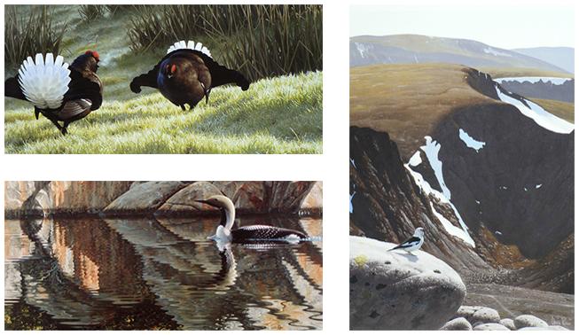 Limited edition wildlife prints